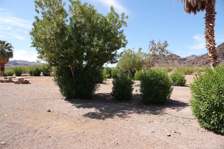 Campsite 3 located in a desert settingBoulder Beach Group Site 3
