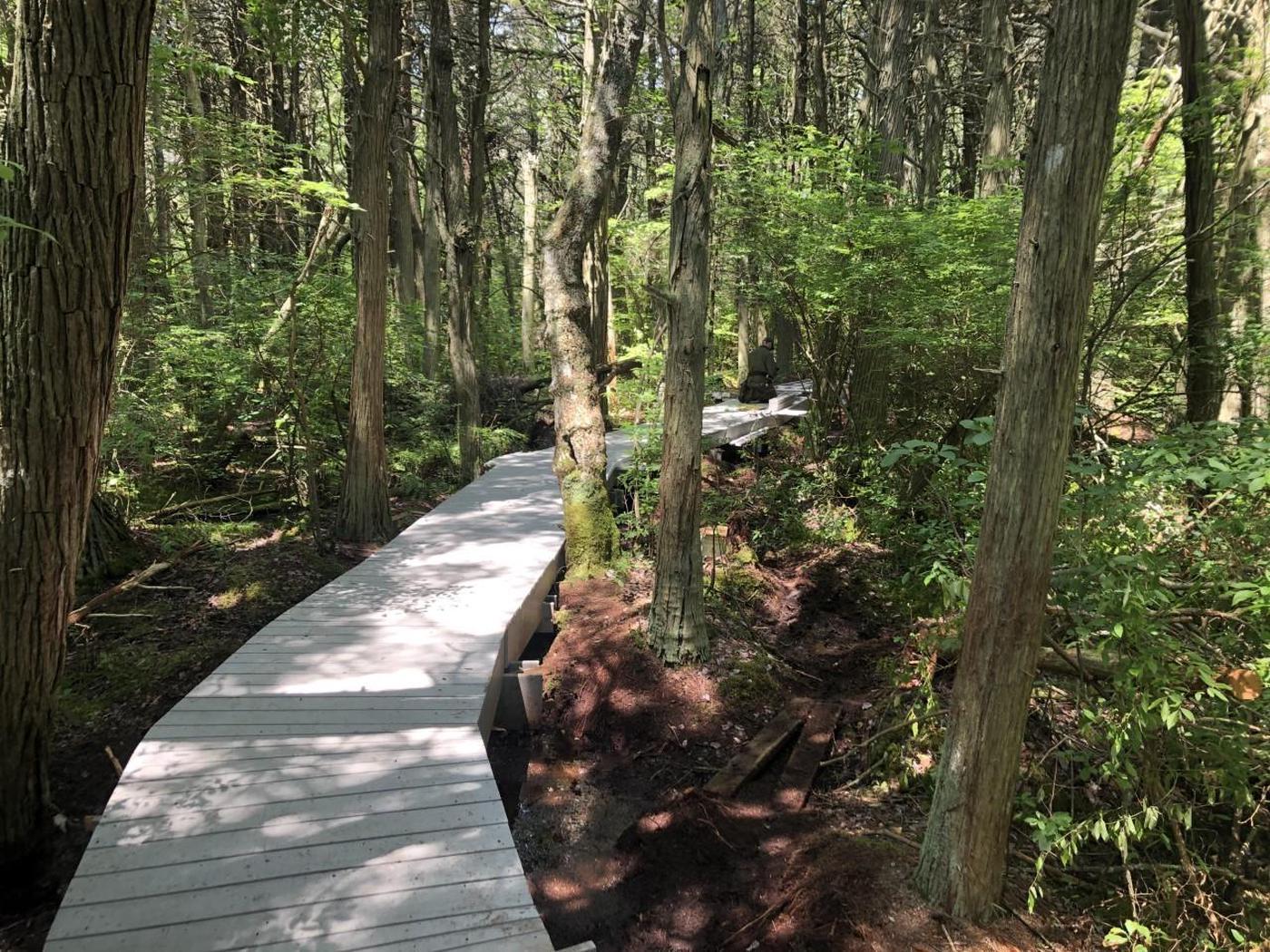 Atlantic White Cedar Swamp TrailThis popular trail takes visitors through the rare habitat of an Atlantic White Cedar swamp.
