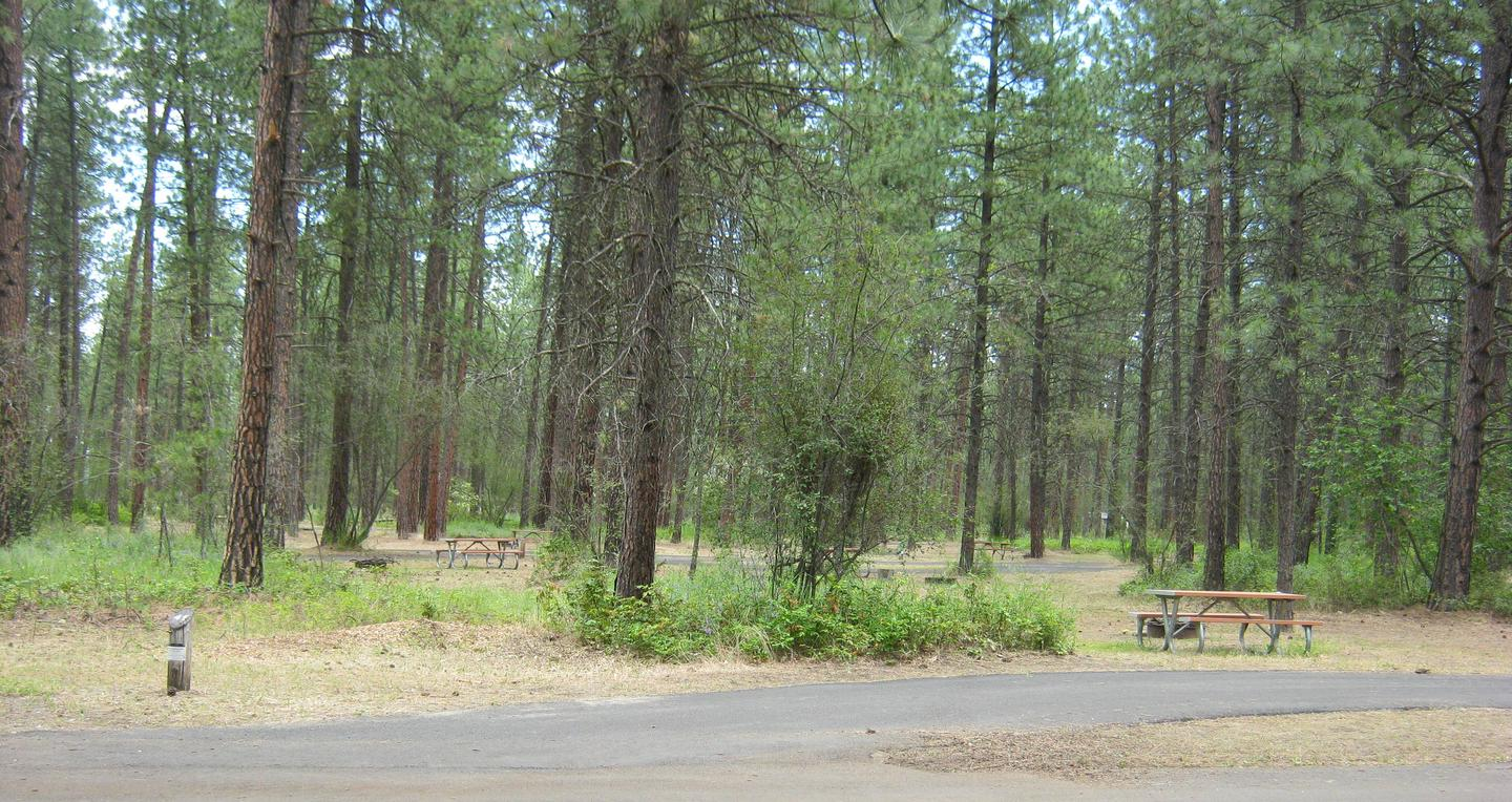 Site 46, Trees in backgroundSite 46, Fire grate, Table and trees in background