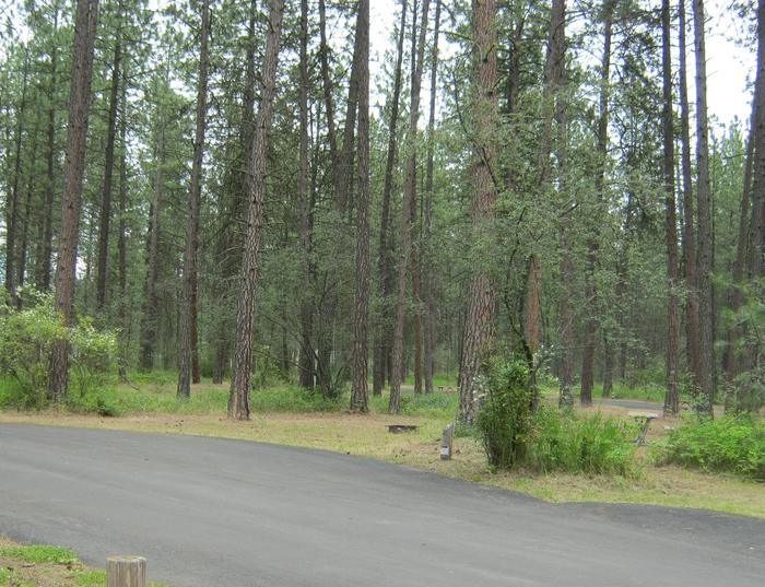 Site 71Site 71, Pull through, Trees in background