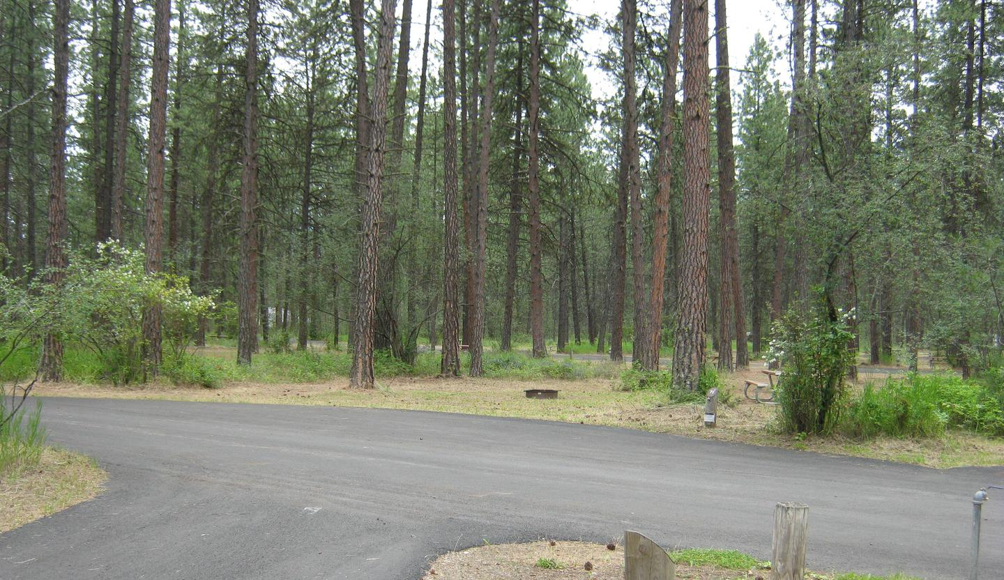 Site 71 - Alt viewSite 71, Pull Through, Trees in Background