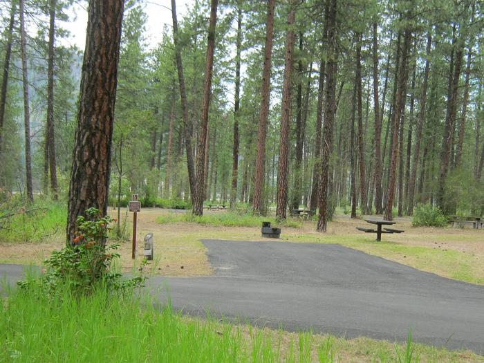 Pine trees in the back dropBack in paved parking with accessible table and fire pit