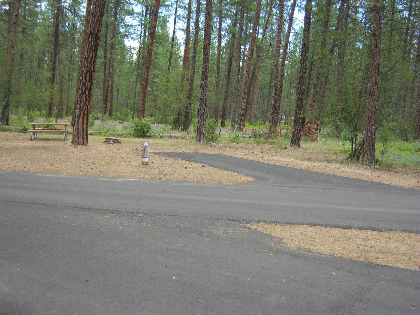 Site 76Site 76, Back in, Trees in background