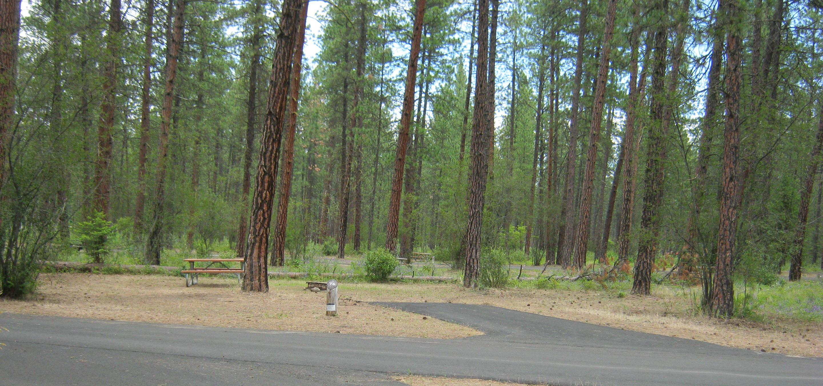 Wide view 76Wide view of site 76, Back in, trees in background