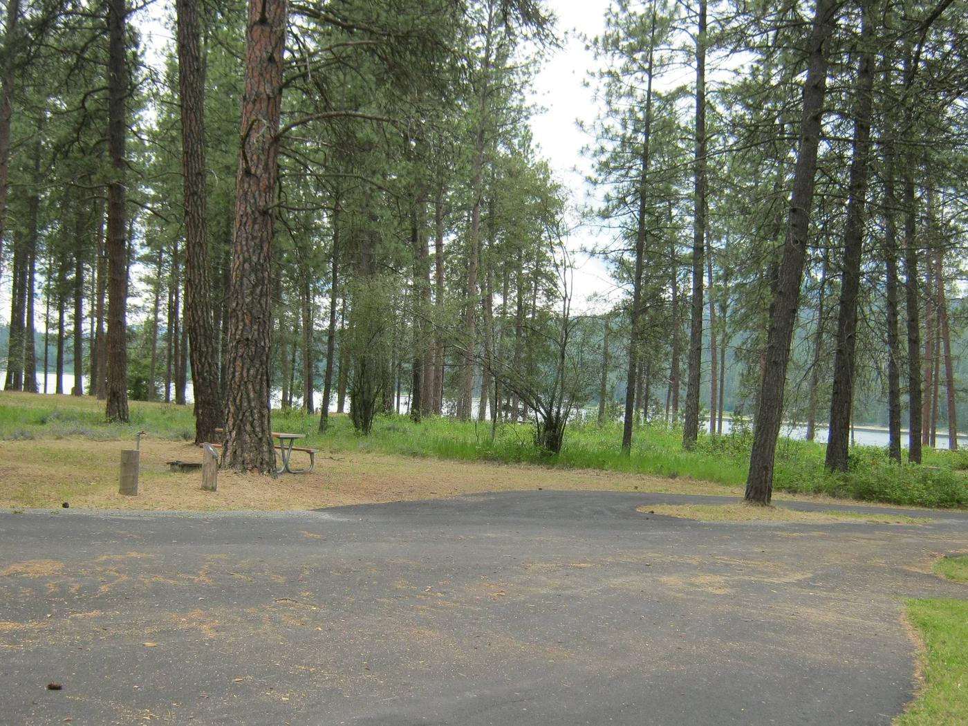 Pine forest back dropPull through paved parking
