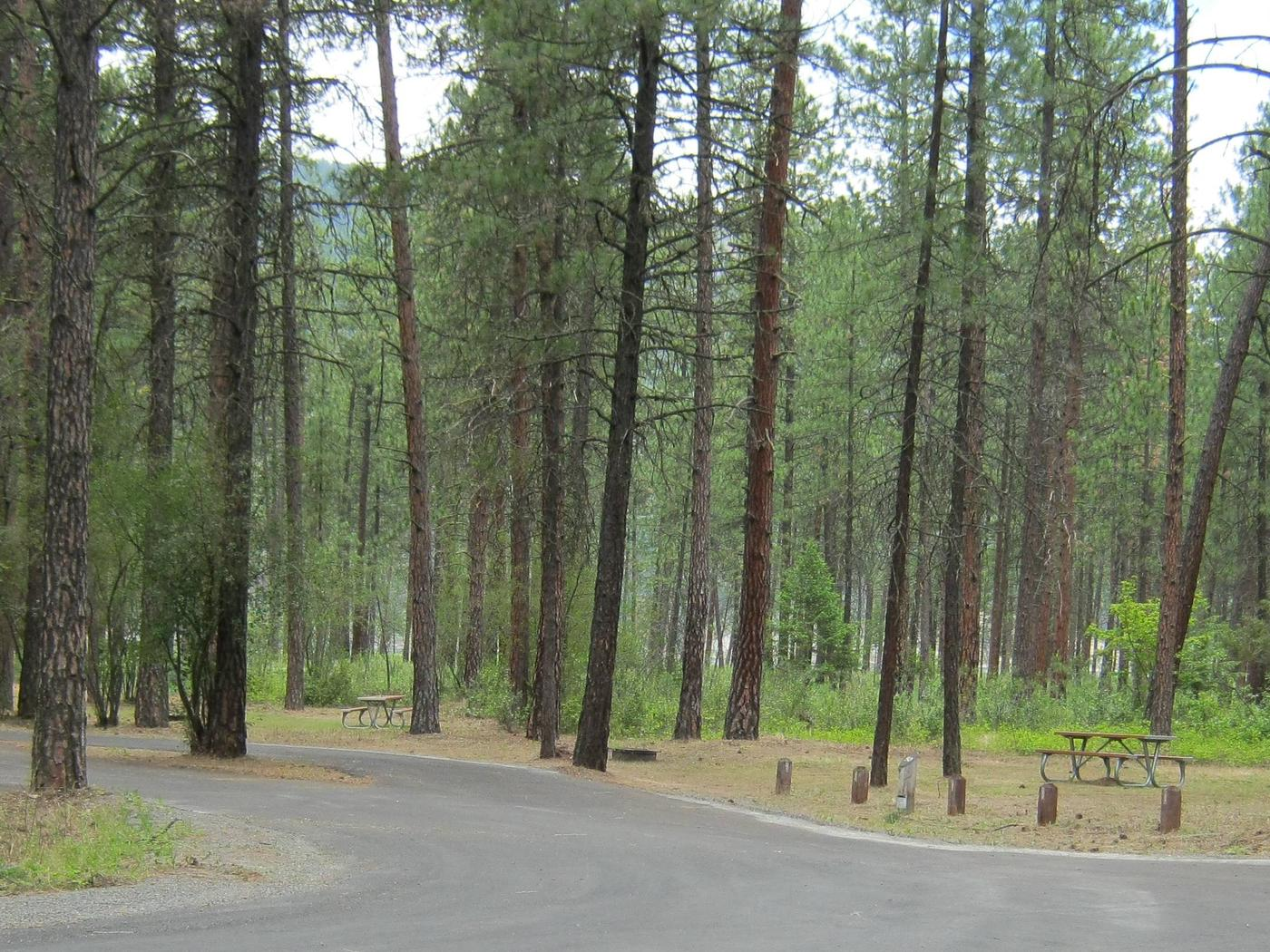 Pine trees in the back dropPull Through paved parking