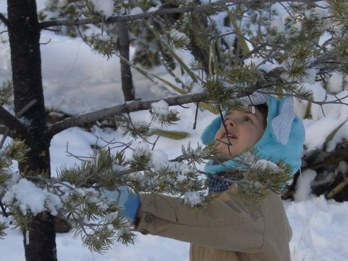 Preview photo of Cibola National Forest Christmas Tree Permit