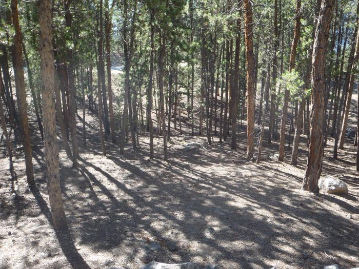 Lakeview Campground, site A13 clearing