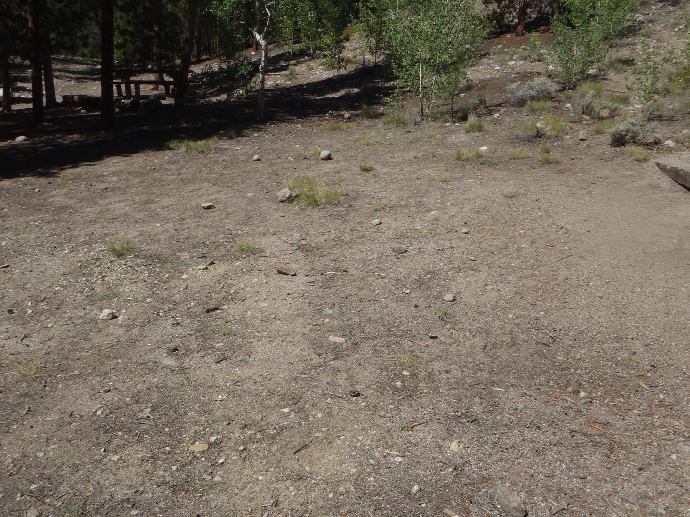 Lakeview Campground, site C4 clearing