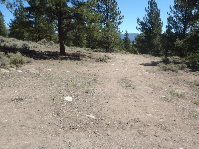Lakeview Campground, site D6 clearing 2