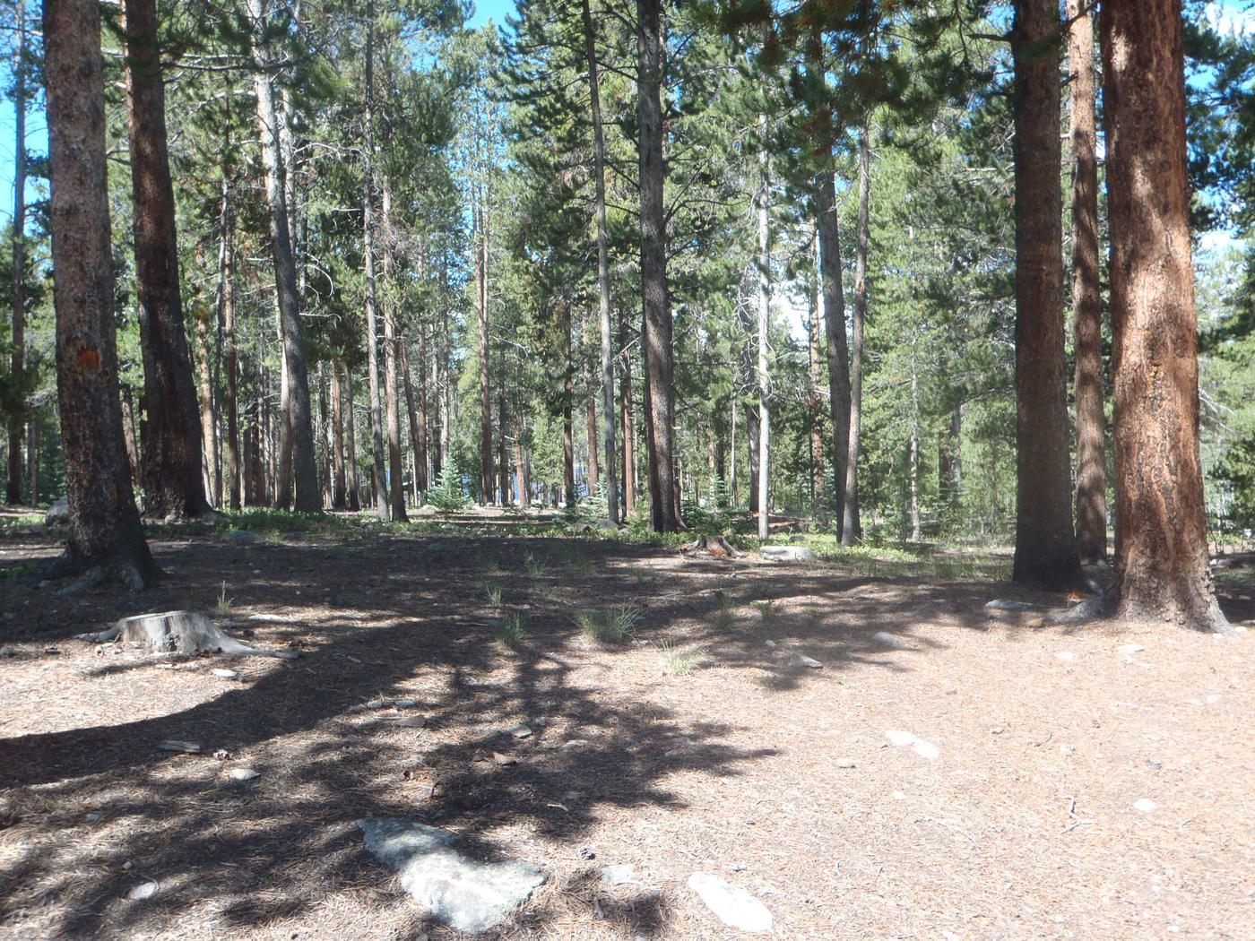 Molly Brown Campground, site 19 clearing