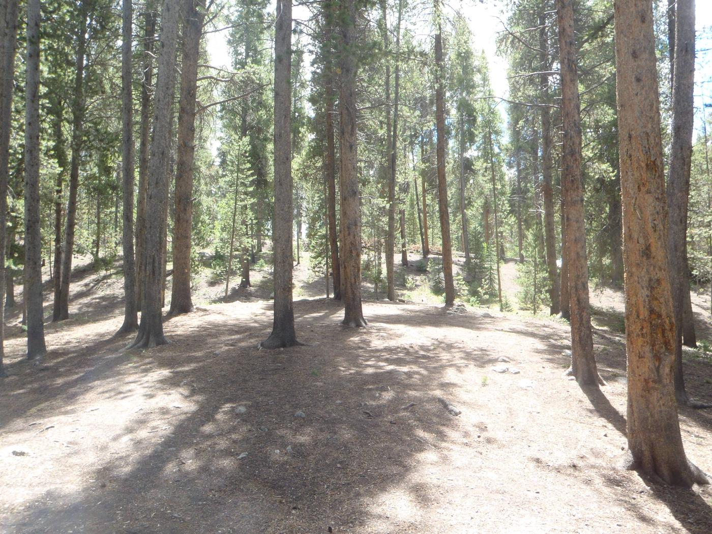 Molly Brown Campground, site 20 clearing