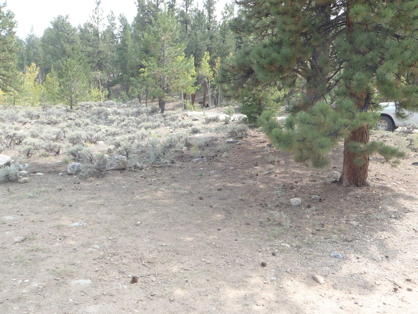 White Star Campground, site 47 clearing