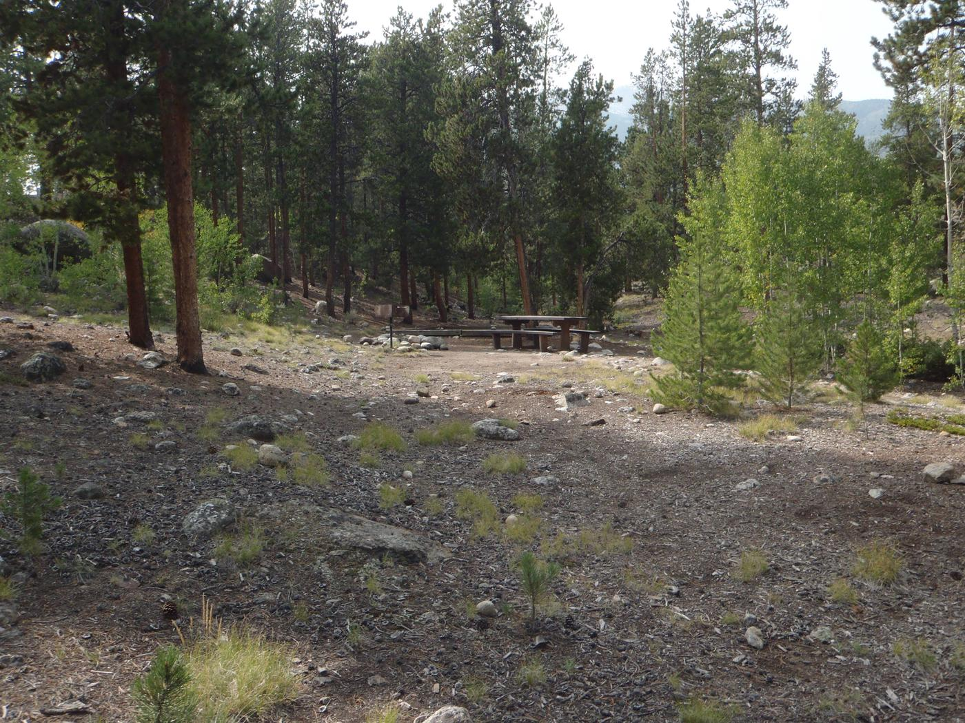White Star Campground, site 65 clearing