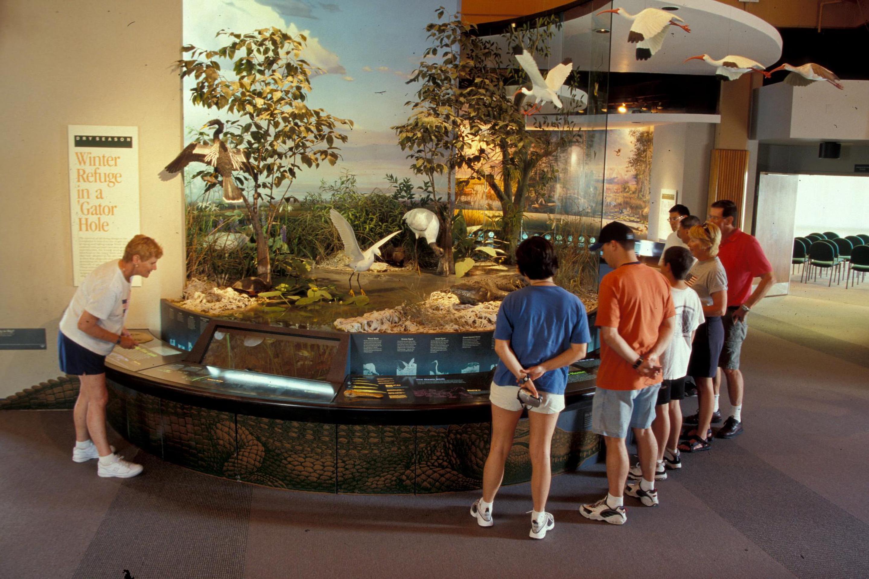 Ernest Coe Wildlife DisplayVisitors stand around a model of an Everglades Habitat