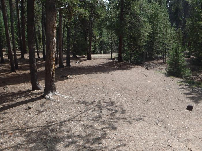 Baby Doe Campground, site 4 clearing
