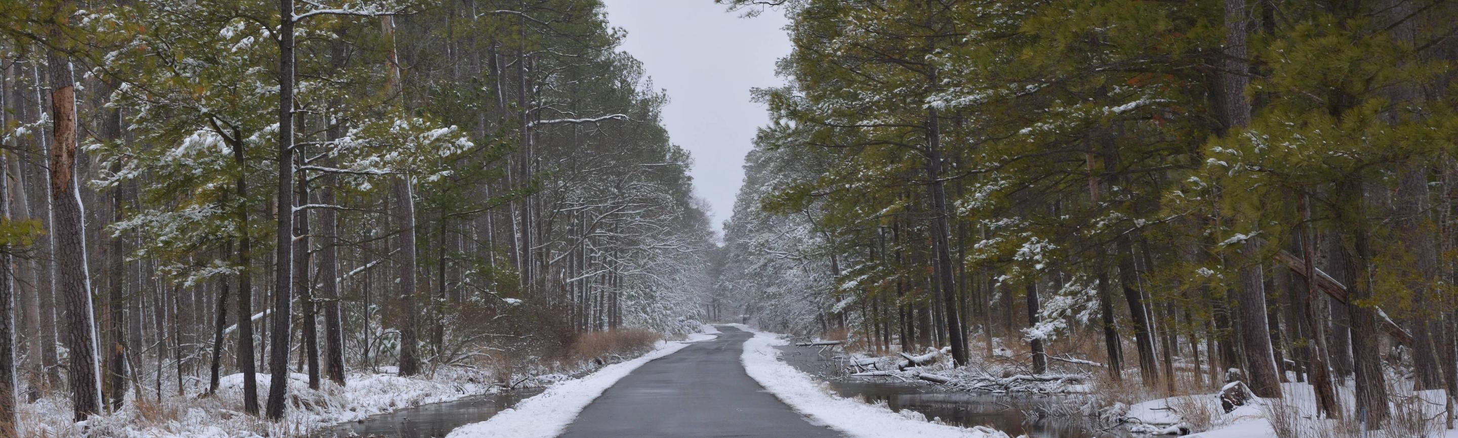 Wildlife Drive at Blackwater National Wildlife Refuge.Wildlife Drive (hunt unit B3) after a snowfall.