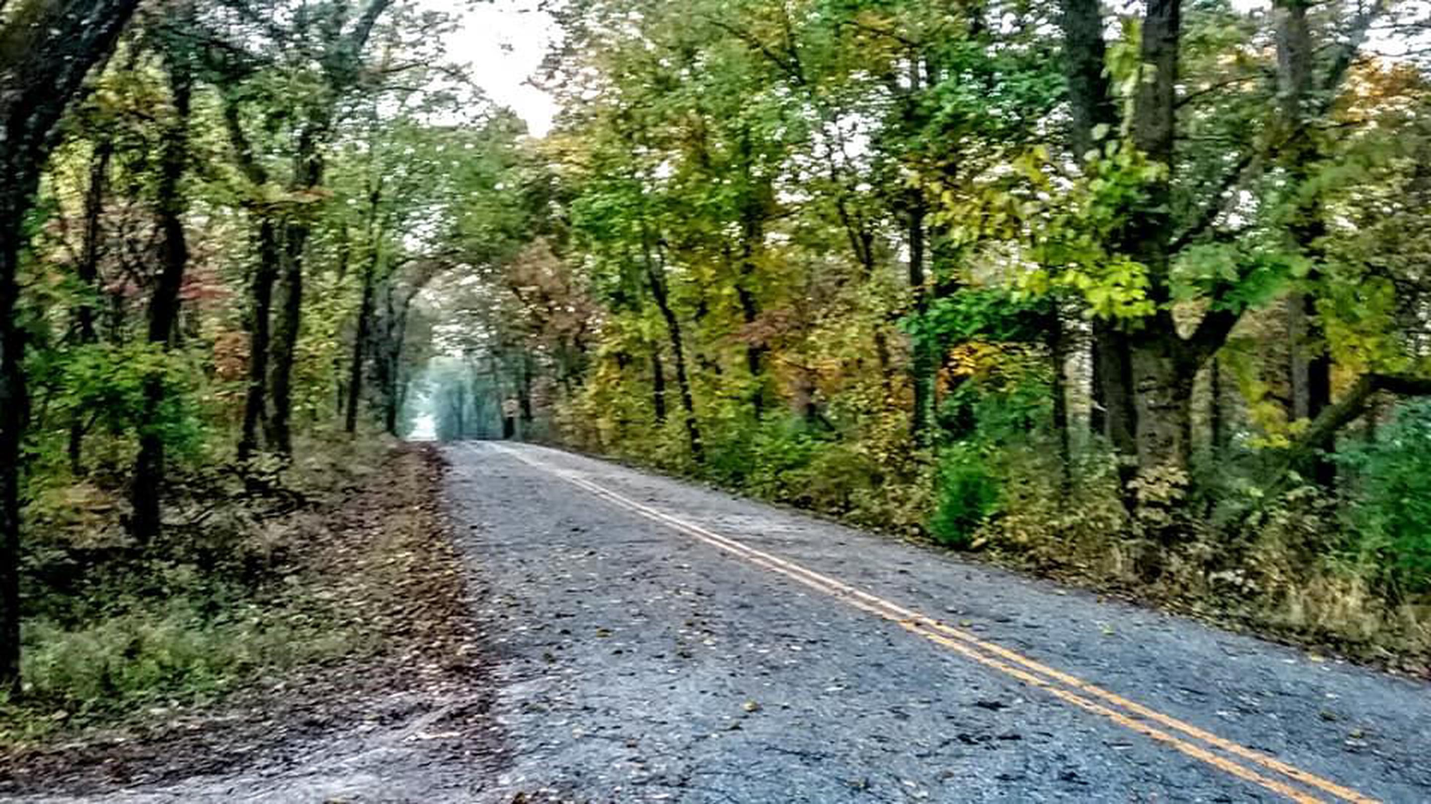 Park Tour Road in FallPark tour road in the fall.