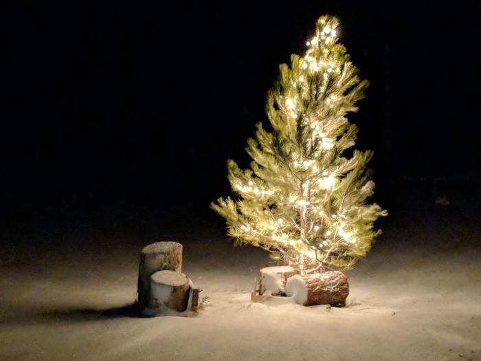 Preview photo of Custer Gallatin National Forest Christmas Tree Permit