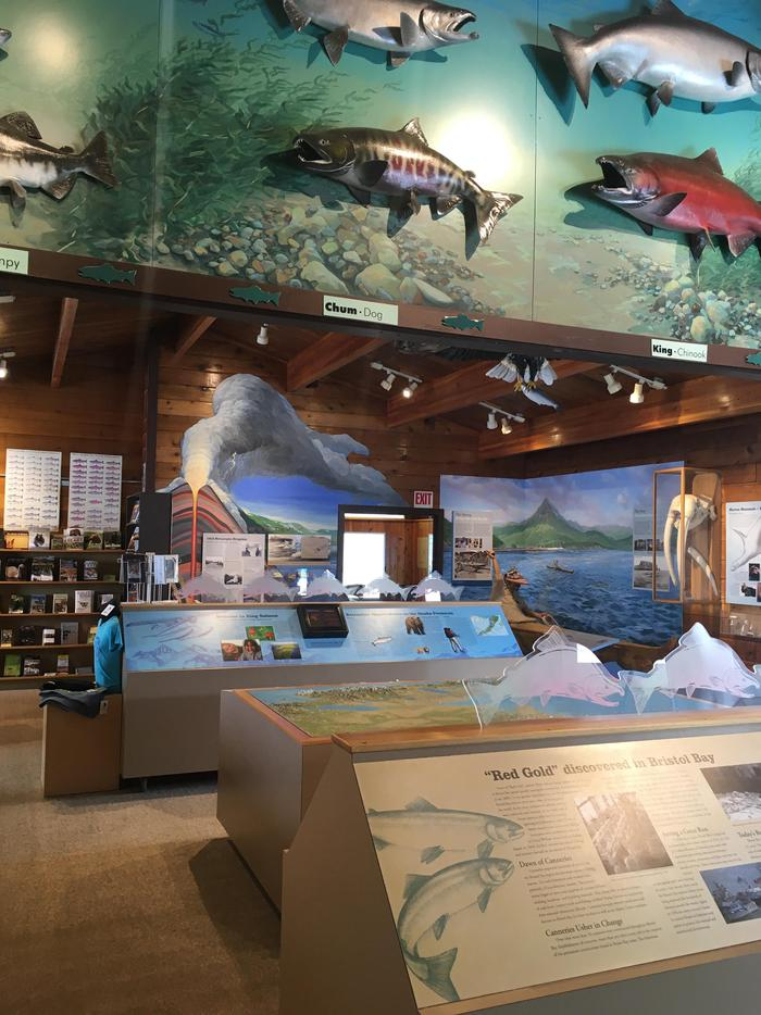 Interior of KSVC #2Upon entering the King Salmon Visitor Center, guests will see exhibits highlighting natural and cultural resources of the surrounding area.