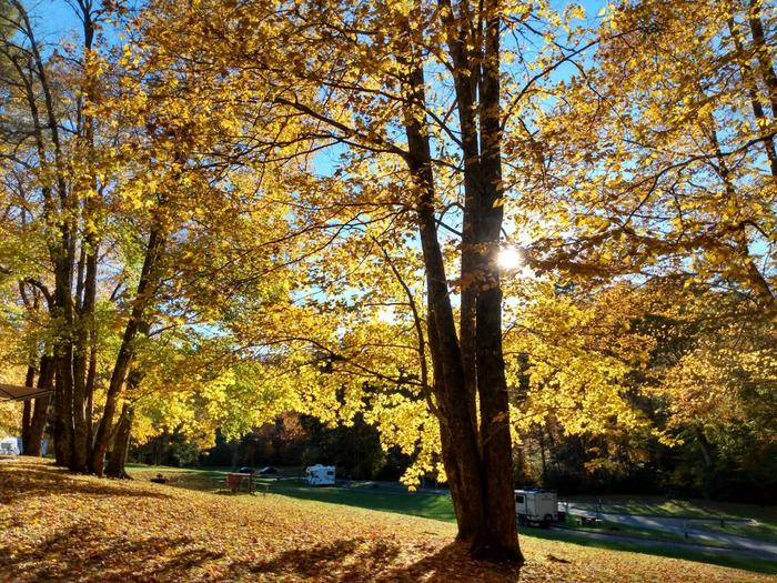 Fall colors on display in bright sunlight.A glorious fall day at Linville Falls Campground