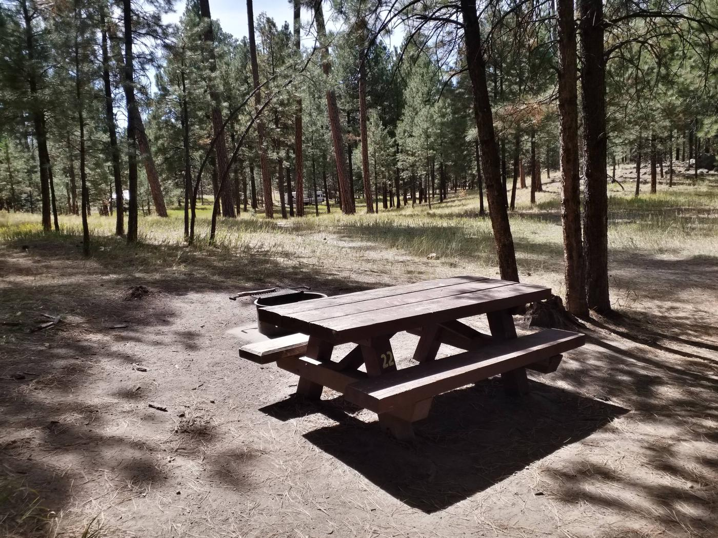 Site 22 sits in the sunlight and provides a picnic table and metal fire ring.Site 22