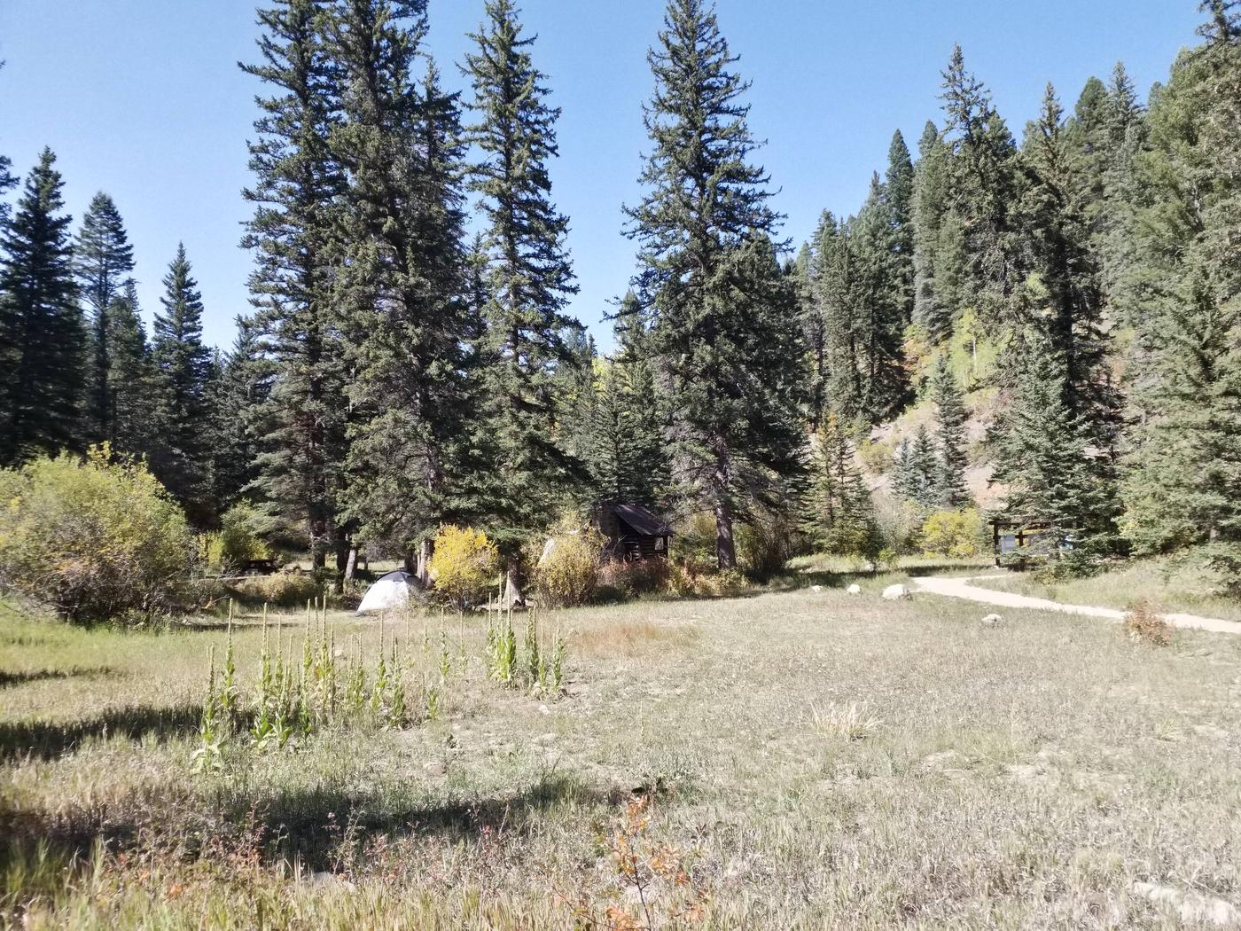 A meadow with spruce and changing fall colors from shrubs in the campground.Meadow in Panchuela Campground.