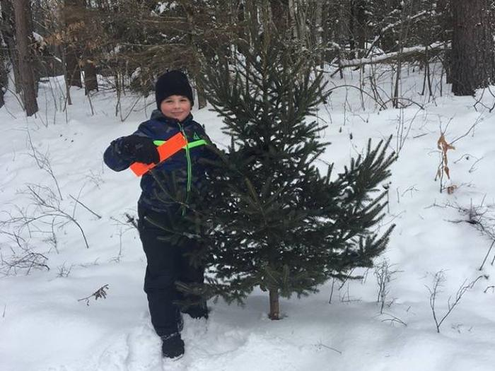 Preview photo of Green Mountain National Forest Christmas Tree Permit
