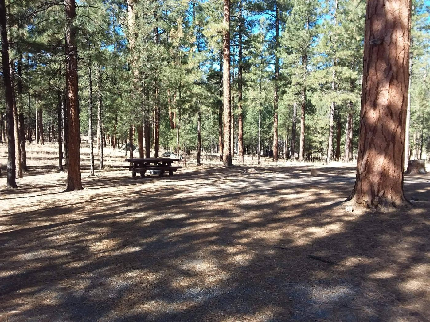 A picnic table and fire ring are surrounded by large pines.Site 33