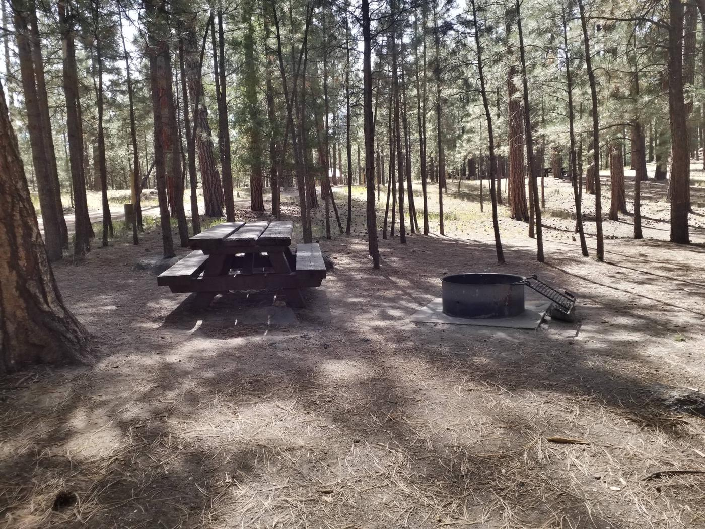 A picnic table with a metal fire ring are shaded by pine trees.Site 35