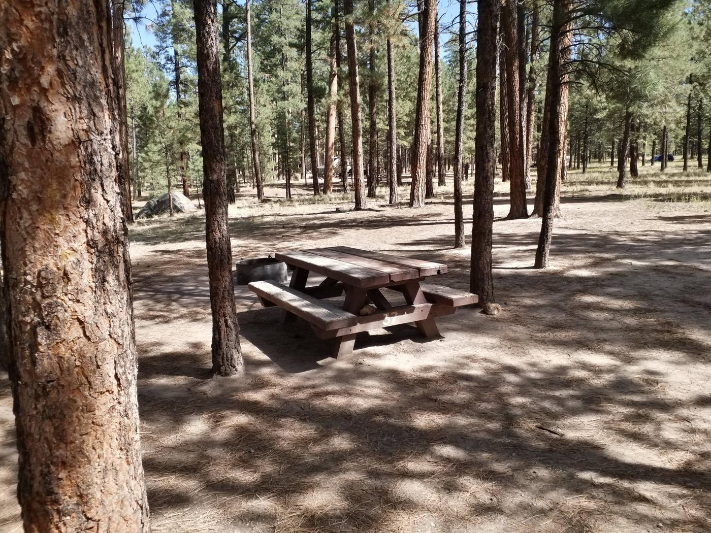 Site 37 has young ponderosa pines shading the picnic table and fire ring.Site 37