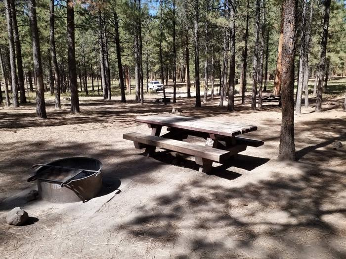 A fire ring and picnic table rest beneath the shade of pines.site 42
