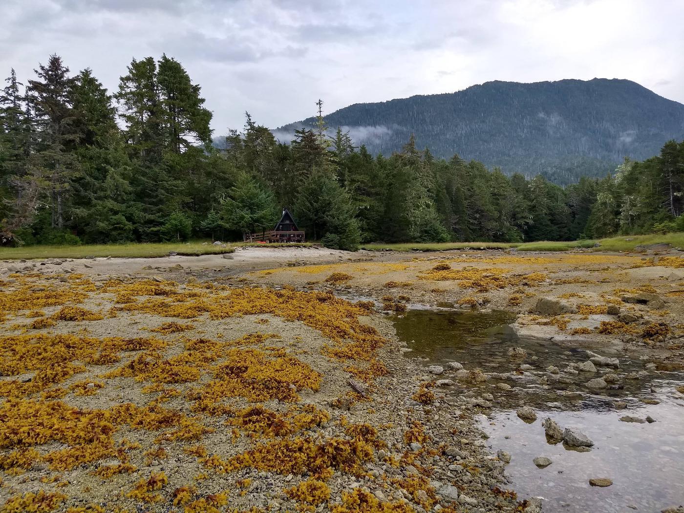 Low tide (1)Looking toward cabin