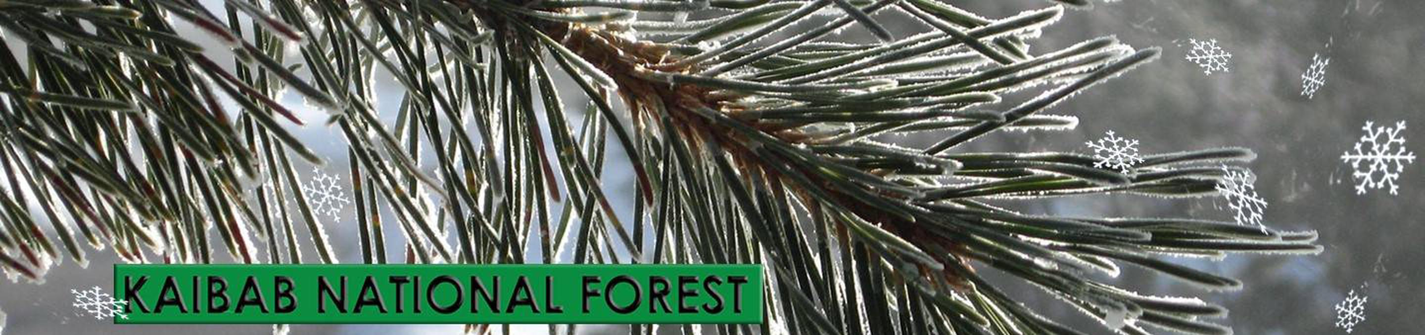 Kaibab National Forest Christmas Tree Permits