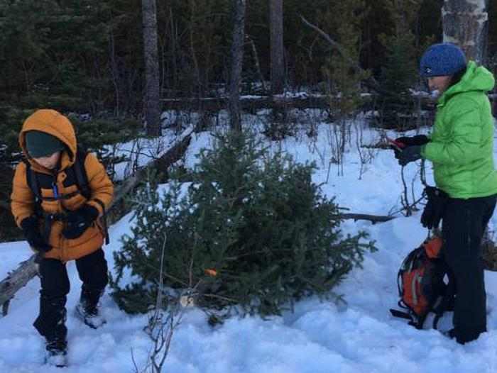 A local family selects their perfect tree for the holiday season.A local family selects their perfect tree for the holiday season.  They are wearing appropriate cold weather, water resistant clothing, hats, gloves and boots.  Using a hand saw and with their permit in hand, they will cut it down.