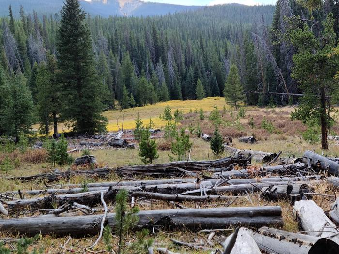 Preview photo of Superior National Forest Christmas Tree Permit