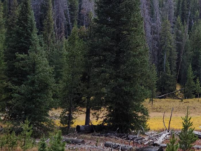 Preview photo of Olympic National Forest Christmas Tree Permit