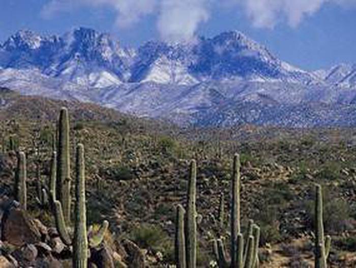 Winter in the desertDesert Winter in Arizona