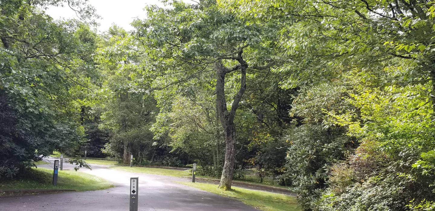 Tall trees help keep the campground cool.Tall trees and high elevation help keep the campground cool.