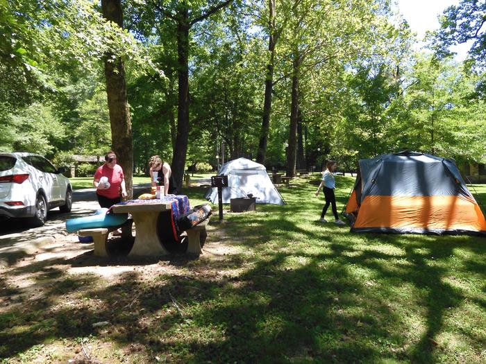 Tent CampingThere are opportunities for tent camping at Gulpha Gorge.