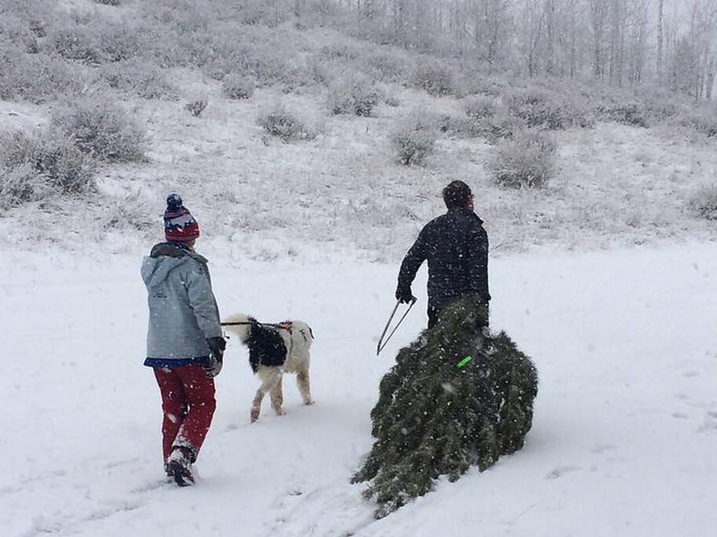 2 Forest Users harvesting a Christmas TreeFamily & Friends Celebrating the Season