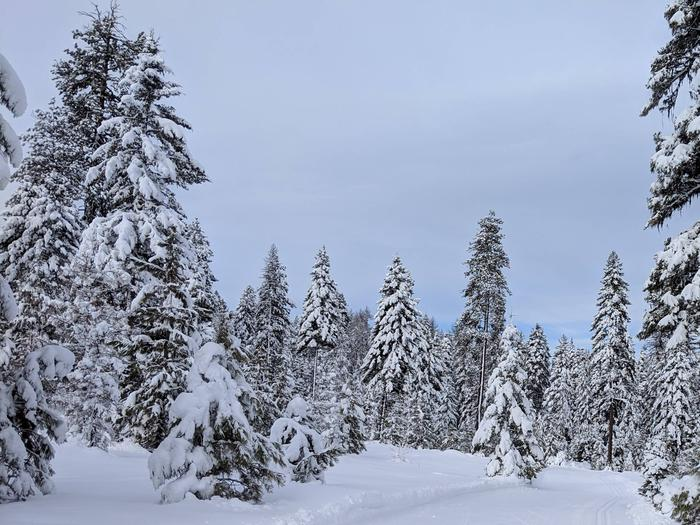 Preview photo of Payette National Forest Christmas Tree Permit