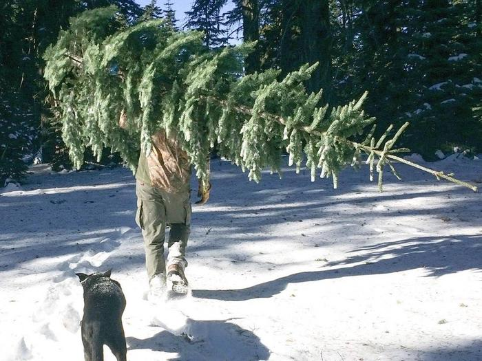 Preview photo of Six Rivers National Forest Christmas Tree Permit