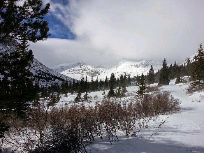 Preview photo of Pike and San Isabel National Forest Christmas Tree Permit