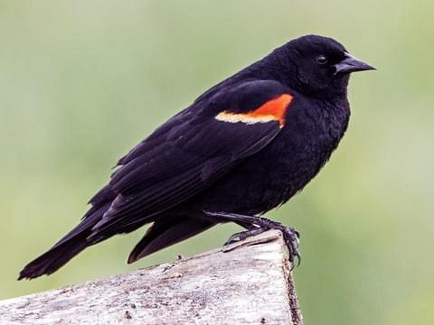 Birding at Lake Meredith