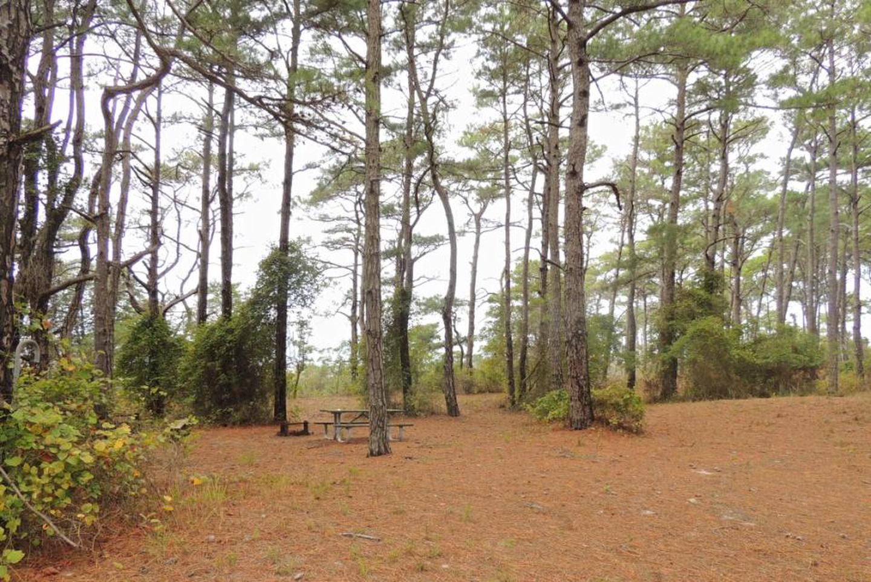 Pine Tree Campsite