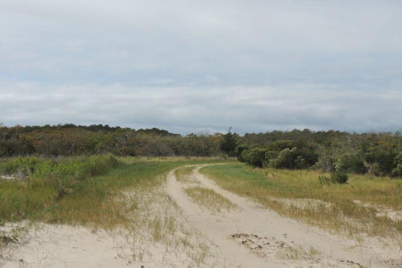 Pine Tree Access Road