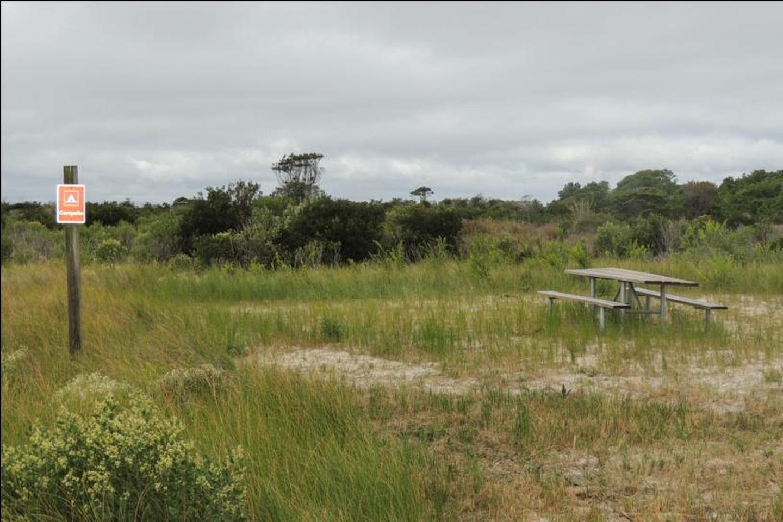 State Line Grassy Campsite