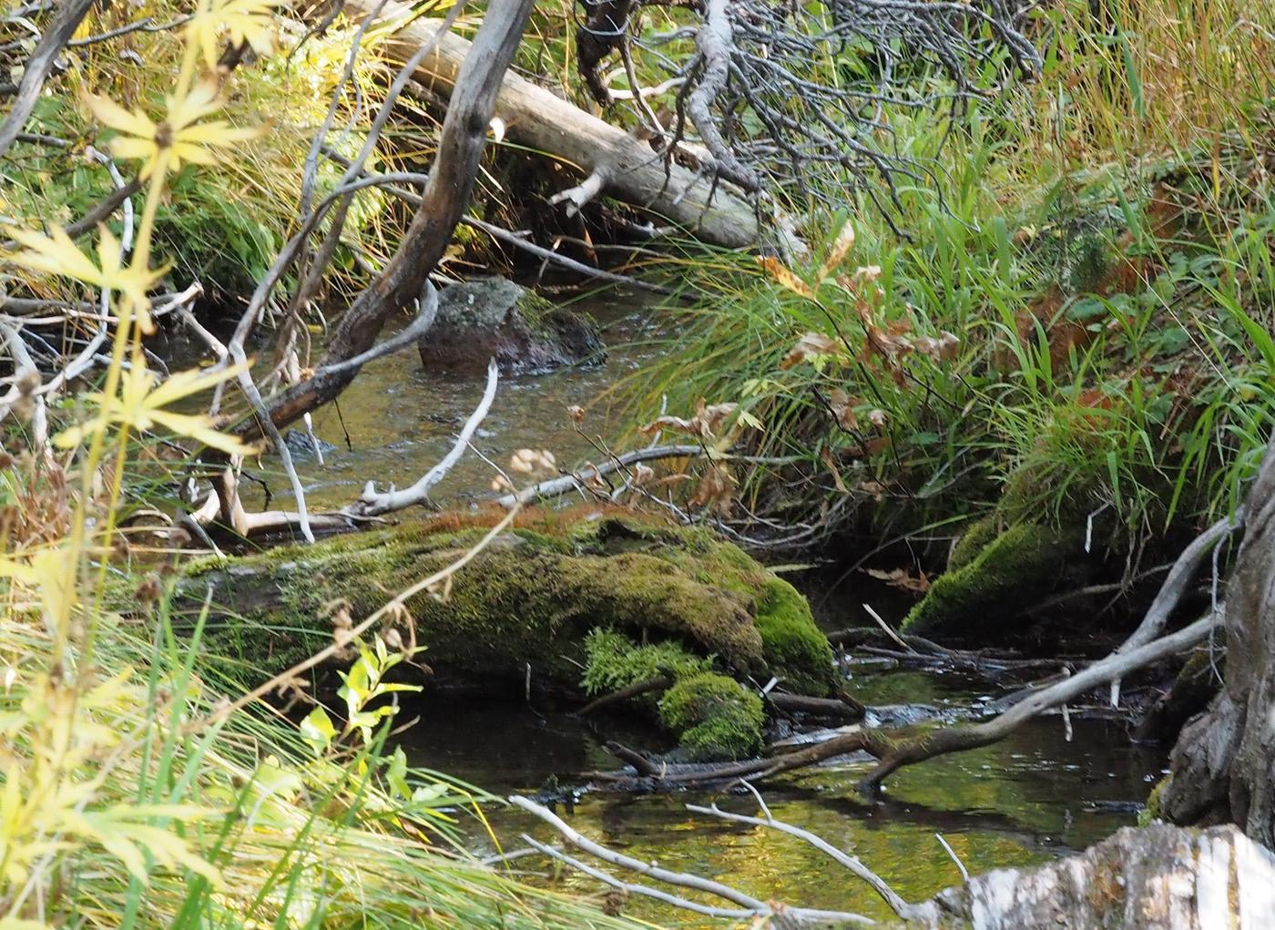 Lost CreekLost Creek runs behind several campsites but is heard at night from most. Once a source of water for the campground but due to downstream tribal rights, NPS may no longer draw from this source.