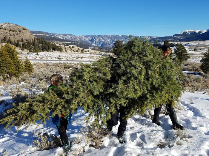 Preview photo of Shoshone National Forest Christmas Tree Permit